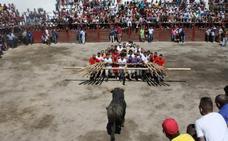 Agosto, el mes del forcón portugués, un evento taurino único en el mundo