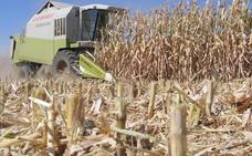 Los cerealistas se oponen a dejar de cosechar por el peligro de incendios