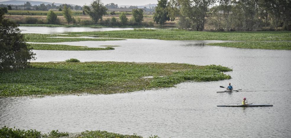 El camalote se expande por el calor y deja sin río a piragüistas y pescadores