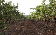 La Unión cree que los criterios para repartir las ayudas al viñedo son una «cacicada»
