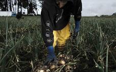 Extremadura busca empleo agrario