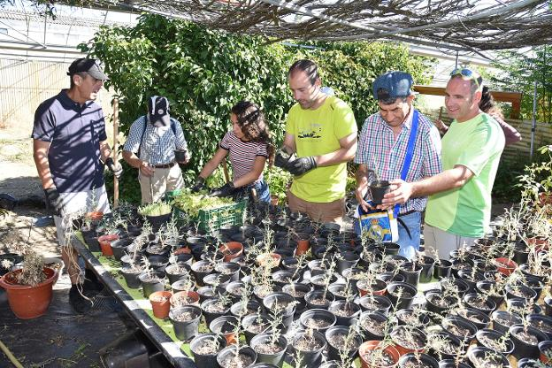 Voluntarios del campo de trabajo en sus labores diarias. :: david Palma/