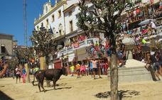 Los toros abren la programación de las ferias agosteñas