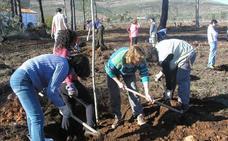 El programa de recuperación de bosques calcinados cumple 15 años