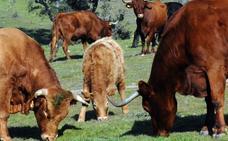 Un proyecto abordará el control y prevención de la tuberculosis bovina en ecosistemas extensivos