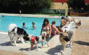 La tercera edición de 'Patas al agua' será el 1 de septiembre en la piscina de Nueva Ciudad