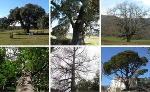 Los próximos árboles singulares de Extremadura deberán ser catalogados antes como notables
