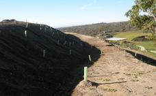 Árboles para las zonas restauradas