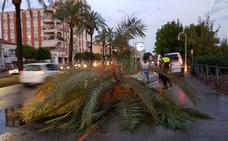 Retiran grandes árboles tirados por la tormenta en varias zonas de Mérida