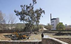 La CHT asegura que la limpieza la Ribera del Marco corresponde al Ayuntamiento de Cáceres
