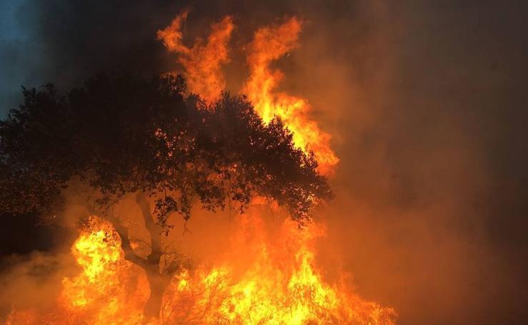 Un incendio afecta al paraje natural de San Isidro, en Badajoz