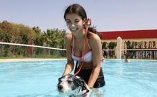 Los perros de Mérida cierran la temporada de piscinas