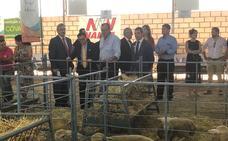La Junta destina 800.000 euros a tres proyectos de innovación del ovino