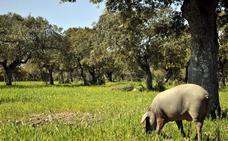 APAG pide la eliminación de las entidades certificadoras del porcino ibérico