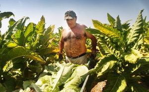 Los últimos tabaqueros de Medellín