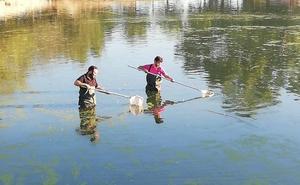 La charca del parque de San Lázaro de Trujillo tiene problemas con el agua por la falta de oxígeno