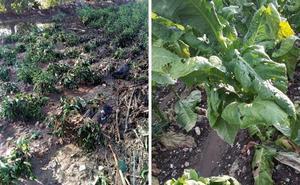 Apag Asaja lamenta la «pasividad» de la Junta ante los daños por las últimas tormentas