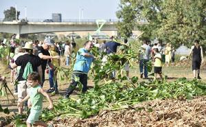 Apag pide usar un herbicida natural extremeño para eliminar el camalote