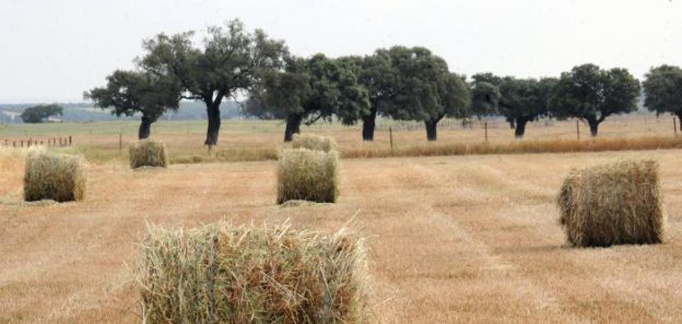 Los agricultores recibirán 263 millones como anticipo de ayudas de la PAC