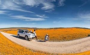 Las flores del desierto del Kalahari