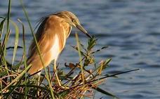 Extremadura muestra su potencial ornitológico en el 'Delta Birding Festival' en Cataluña