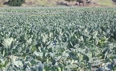 La región dispone de 94.000 hectáreas de cultivo ecológico