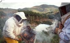 Los apicultores solicitan ayudas tras otra campaña negativa