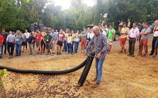 Extremadura quiere coger más castañas