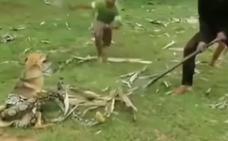 Salvan a un perro de una serpiente
