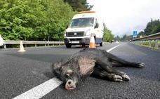 La región registra 5.190 accidentes de tráfico con animales desde 2012