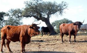 La región debe devolver 623.000 euros por errores en el control de ganado vacuno