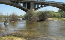 La Confederación del Tajo contempla limpiar el Tiétar para evitar las inundaciones