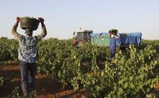 La Unión pide que no se enriquezcan los vinos con mostos rectificados