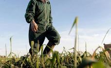 Agricultura empieza a pagar 106 millones de la PAC en Extremadura