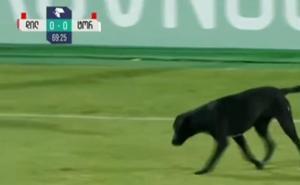 Un perro invade un campo de fútbol