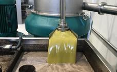 Tres cooperativas se unen a la de Los Santos para ganar peso en el sector del aceite de oliva
