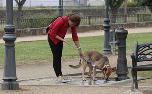Ocho entidades piden que el Ayuntamiento de Plasencia no financie espectáculos con animales