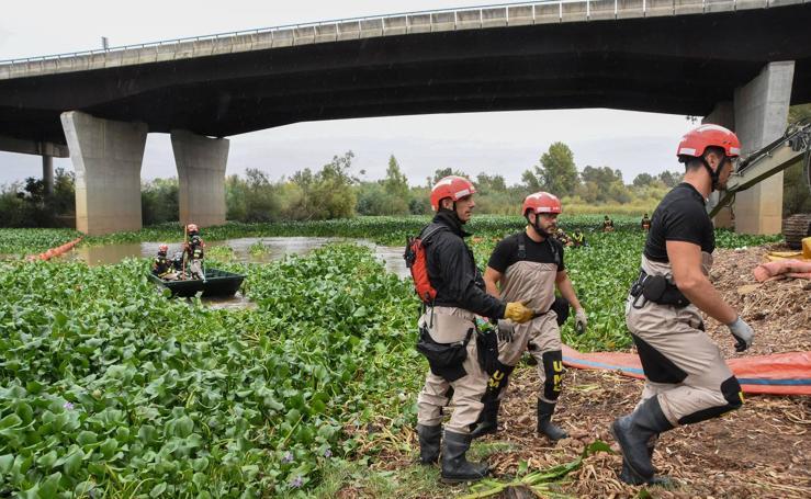 La UME inicia los trabajos para retirar el camalote del Guadiana