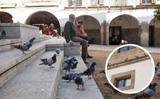 Cruzada contra las palomas en el casco antiguo de Cáceres