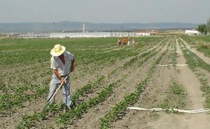 Agricultura crea una bolsa de tierras para cultivar 4.600 hectáreas de riego en desuso