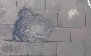 La colmena de avispa aparecida en La Parra no era asiática