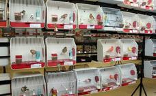 El concurso ornitológico de Villanueva acoge casi 1.300 ejemplares