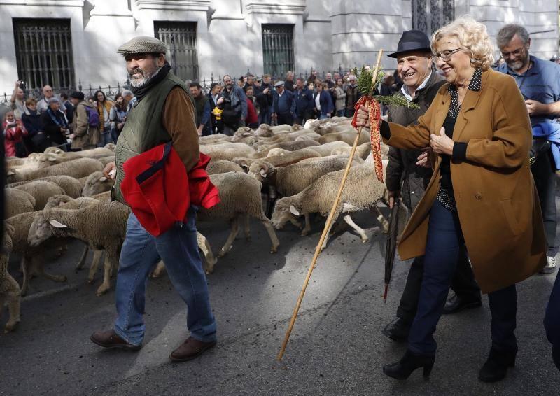 1.500 ovejas cruzan Madrid en la Fiesta de la Trashumancia
