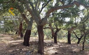 Detenido un vecino de Alcuéscar por el hurto de 3.800 kilos de corcho en Cabañas del Castillo