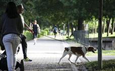 La provincia cacereña, con 162.000 perros censados, se suma a la tenencia responsable de mascotas
