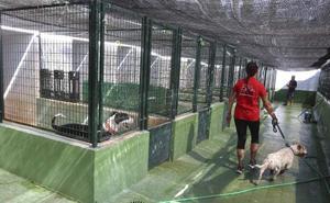Multas de hasta 15.000 euros para las personas que abandonen animales en Mérida