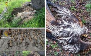 Un detenido y tres investigados por usar veneno para cazar aves protegidas