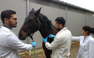 Aparecen dos caballos en Cáceres y Moraleja infectados por el virus de Nilo