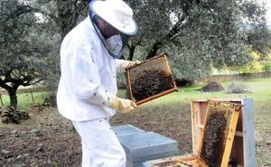 UPA-UCE reclama un etiquetado correcto de la miel y el control del producto importado