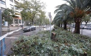 Empiezan a eliminar acacias en la mediana de Virgen de Guadalupe en Cáceres